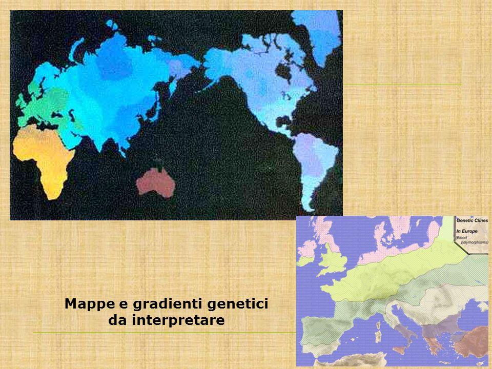 Mappe e gradienti genetici da interpretare