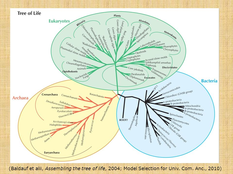 (Baldauf et alii, Assembling the tree of life, 2004; Model Selection for Univ. Com. Anc., 2010)