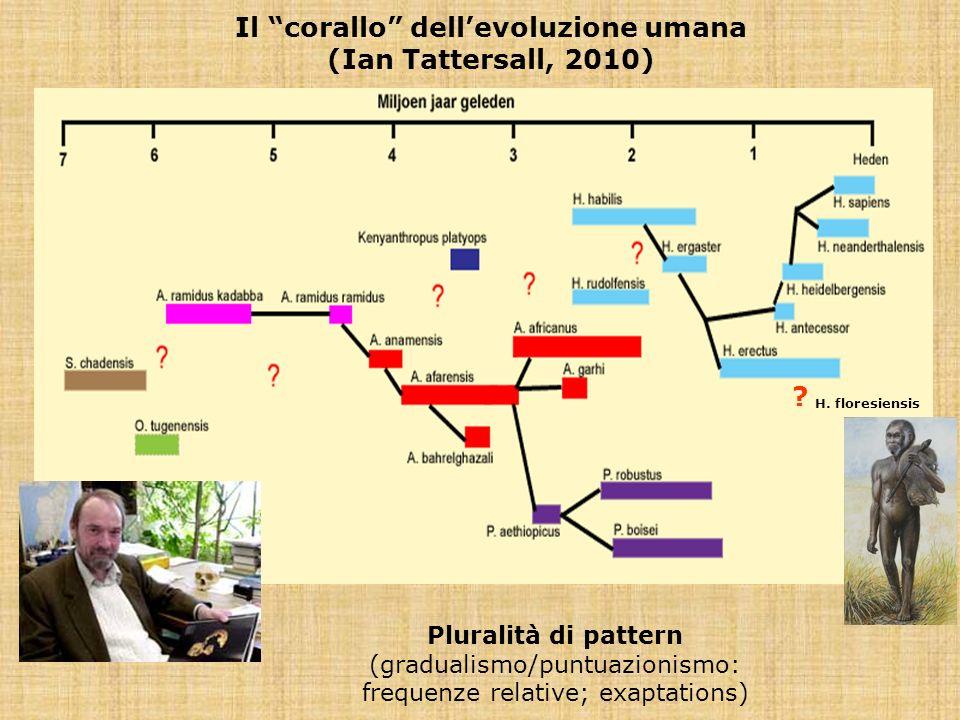 Il corallo dellevoluzione umana (Ian Tattersall, 2010) H. floresiensis Pluralità di pattern (gradualismo/puntuazionismo: frequenze relative; exaptatio
