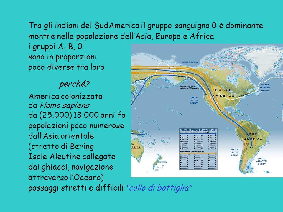 Tra gli indiani del SudAmerica il gruppo sanguigno 0 è dominante mentre nella popolazione dellAsia, Europa e Africa i gruppi A, B, 0 sono in proporzio