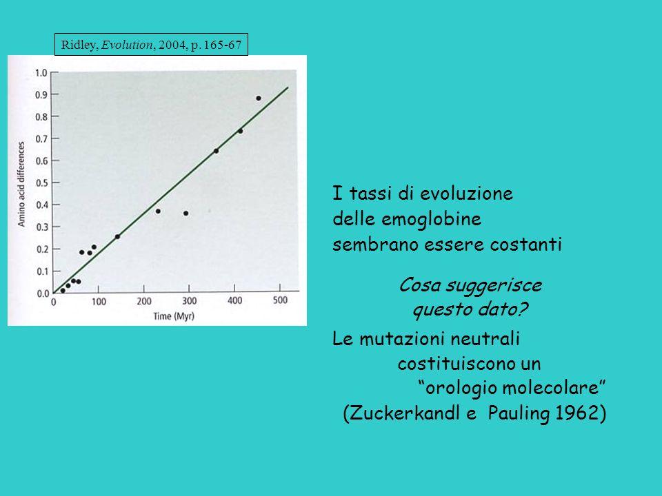 I tassi di evoluzione delle emoglobine sembrano essere costanti Cosa suggerisce questo dato? Le mutazioni neutrali costituiscono un orologio molecolar