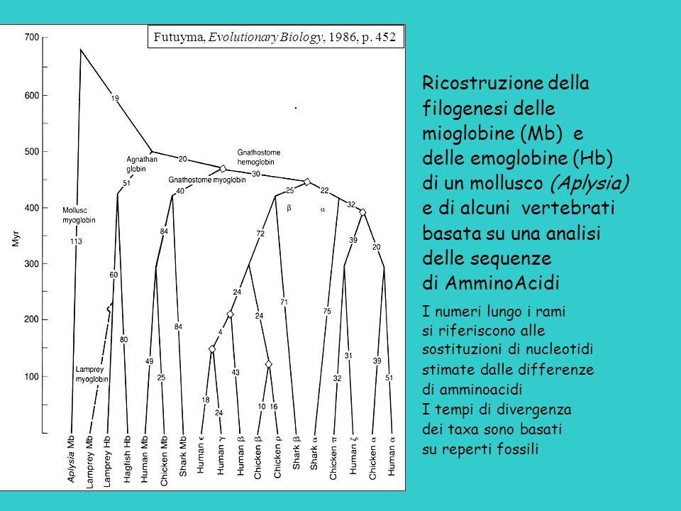 . Ricostruzione della filogenesi delle mioglobine (Mb) e delle emoglobine (Hb) di un mollusco (Aplysia) e di alcuni vertebrati basata su una analisi d