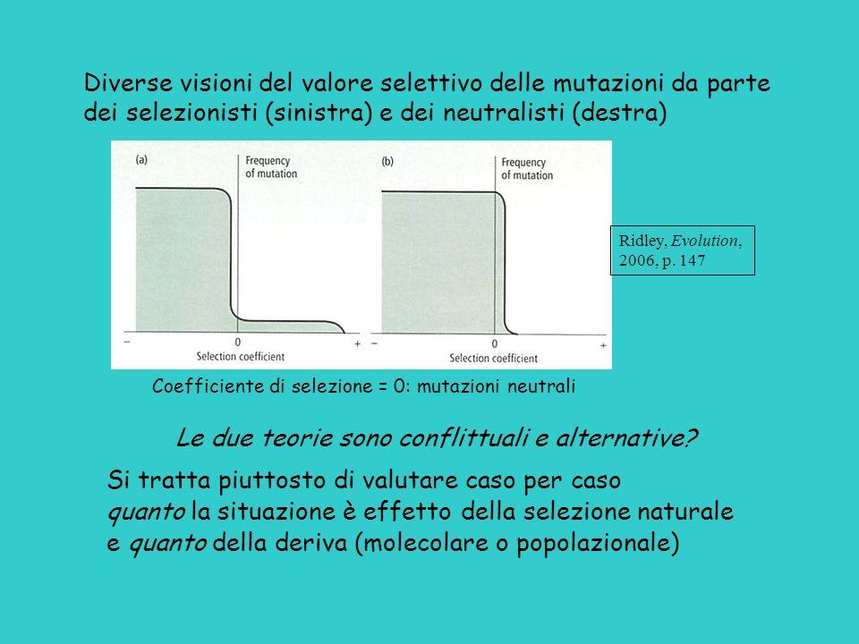 Diverse visioni del valore selettivo delle mutazioni da parte dei selezionisti (sinistra) e dei neutralisti (destra) Coefficiente di selezione = 0: mu