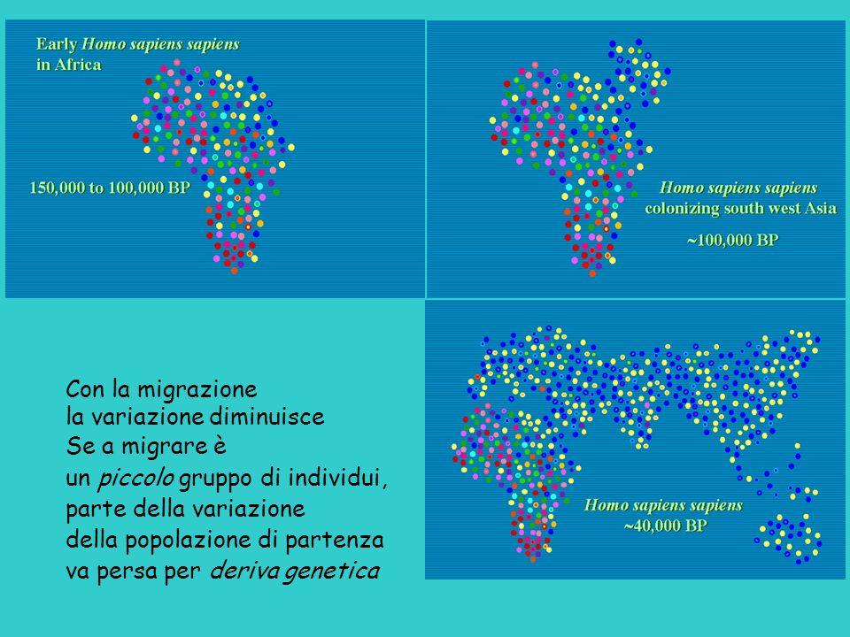 Con la migrazione la variazione diminuisce Se a migrare è un piccolo gruppo di individui, parte della variazione della popolazione di partenza va pers