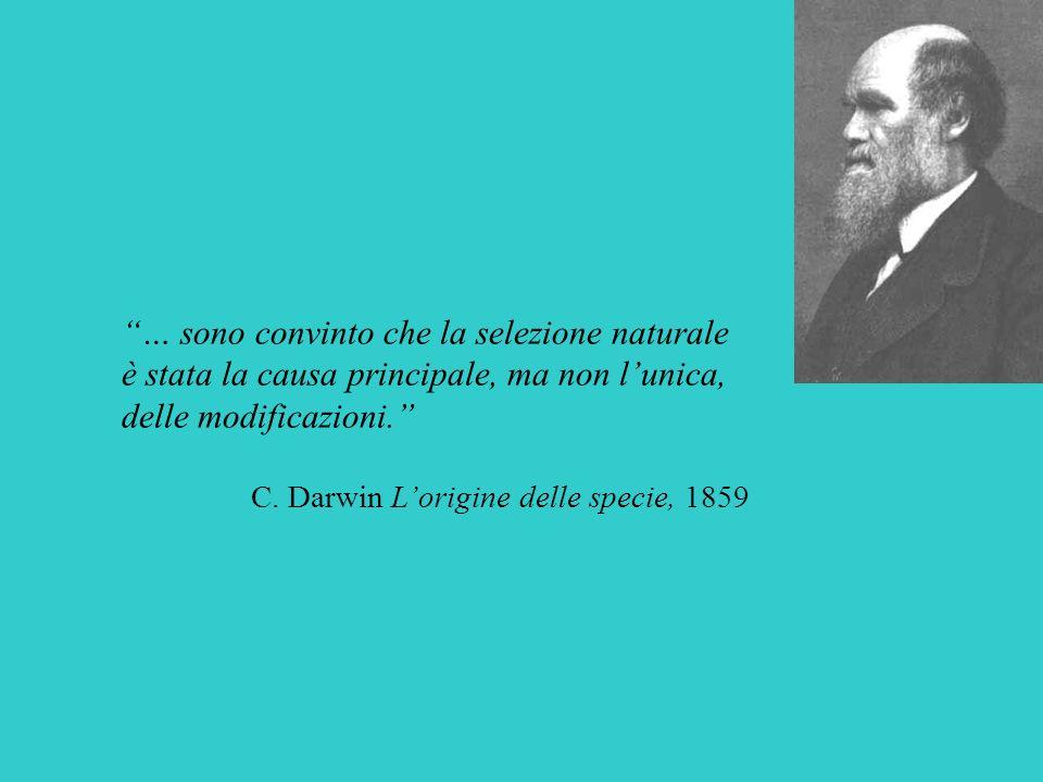 … sono convinto che la selezione naturale è stata la causa principale, ma non lunica, delle modificazioni. C. Darwin Lorigine delle specie, 1859