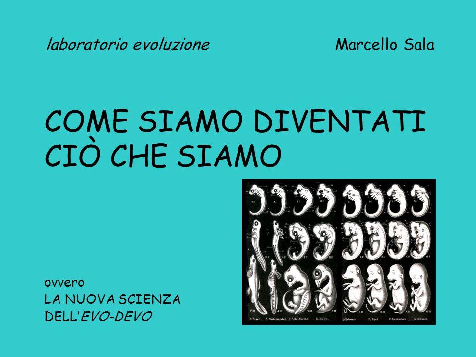 laboratorio evoluzione Marcello Sala COME SIAMO DIVENTATI CIÒ CHE SIAMO ovvero LA NUOVA SCIENZA DELLEVO-DEVO