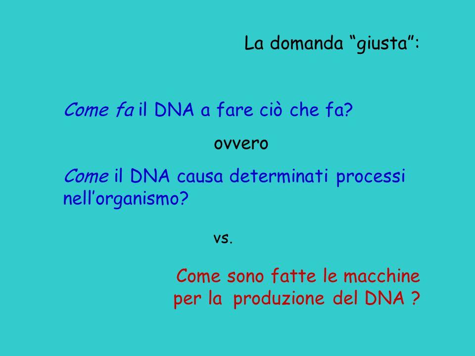La domanda giusta: Come fa il DNA a fare ciò che fa? ovvero Come il DNA causa determinati processi nellorganismo? vs. Come sono fatte le macchine per