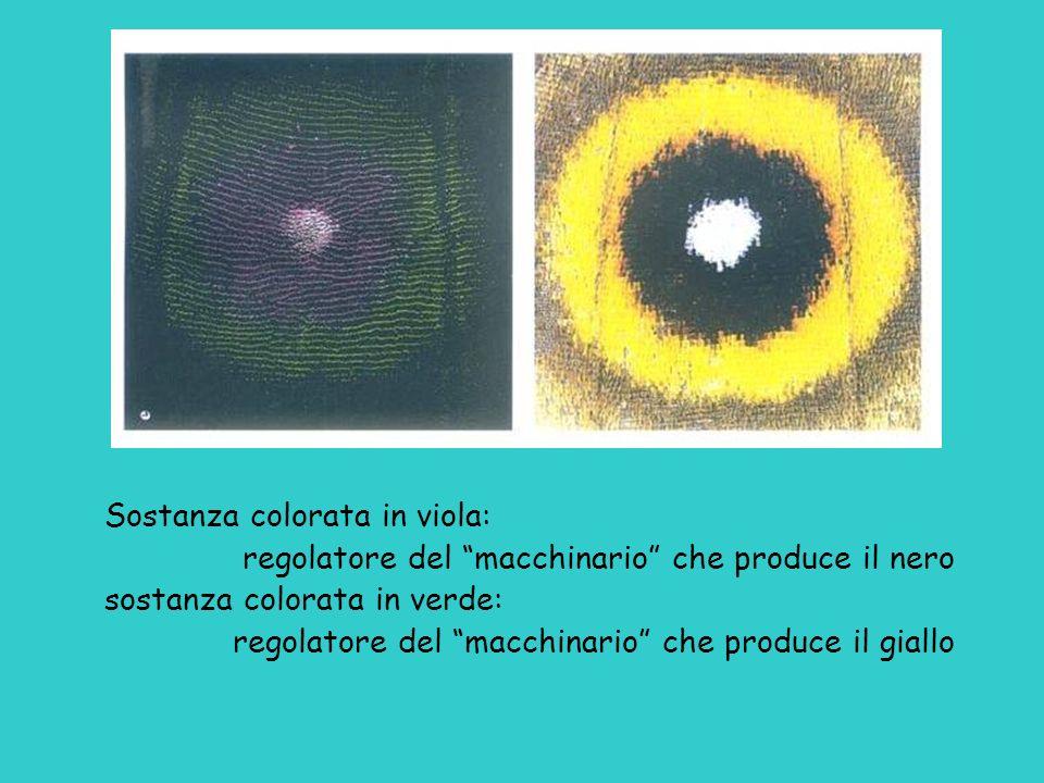Sostanza colorata in viola: regolatore del macchinario che produce il nero sostanza colorata in verde: regolatore del macchinario che produce il giall