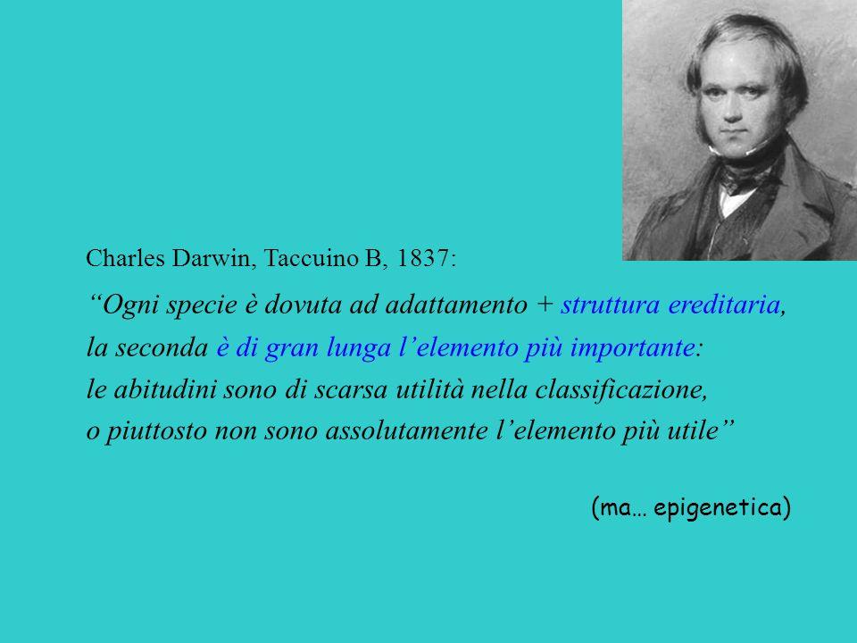 Charles Darwin, Taccuino B, 1837: Ogni specie è dovuta ad adattamento + struttura ereditaria, la seconda è di gran lunga lelemento più importante: le