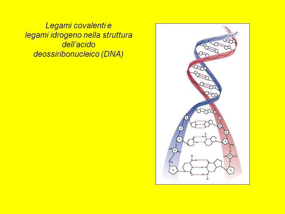 Legami covalenti e legami idrogeno nella struttura dellacido deossiribonucleico (DNA)