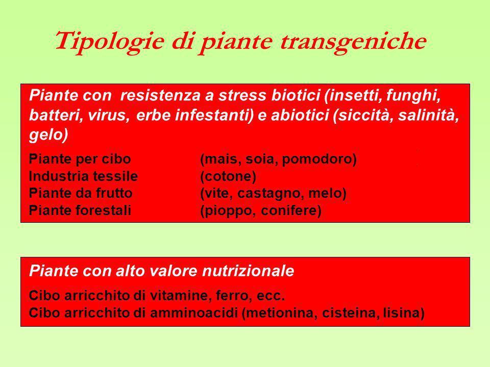 Tipologie di piante transgeniche Piante con resistenza a stress biotici (insetti, funghi, batteri, virus, erbe infestanti) e abiotici (siccità, salini
