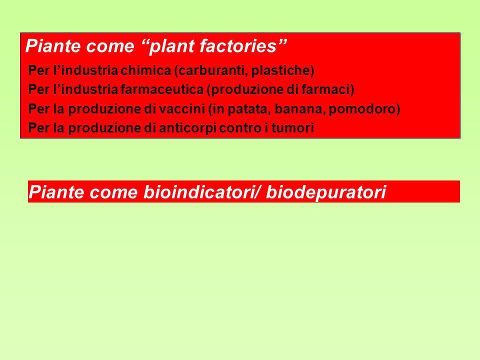 Piante come plant factories Per lindustria chimica (carburanti, plastiche) Per lindustria farmaceutica (produzione di farmaci) Per la produzione di va
