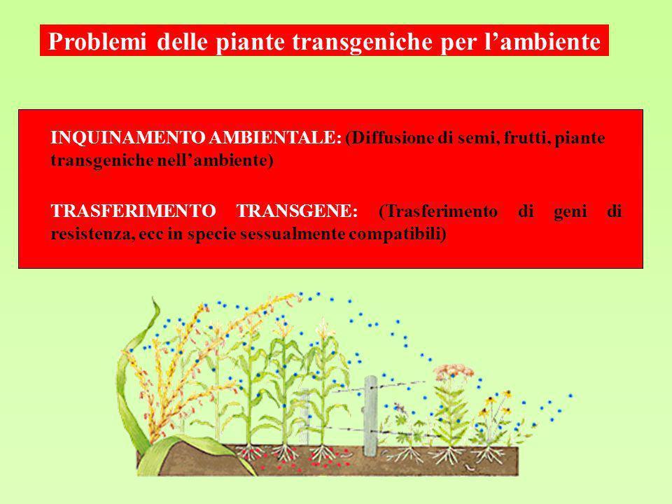 INQUINAMENTO AMBIENTALE: (Diffusione di semi, frutti, piante transgeniche nellambiente) Problemi delle piante transgeniche per lambiente TRASFERIMENTO