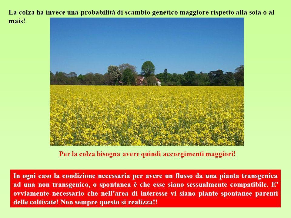 La colza ha invece una probabilità di scambio genetico maggiore rispetto alla soia o al mais! In ogni caso la condizione necessaria per avere un fluss