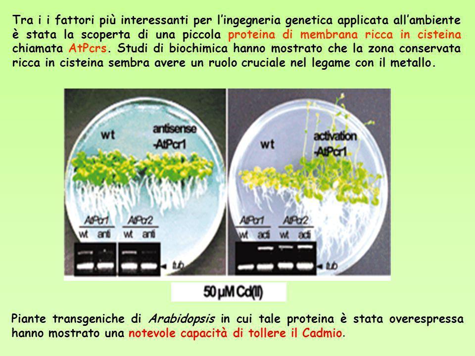 Tra i i fattori più interessanti per lingegneria genetica applicata allambiente è stata la scoperta di una piccola proteina di membrana ricca in ciste