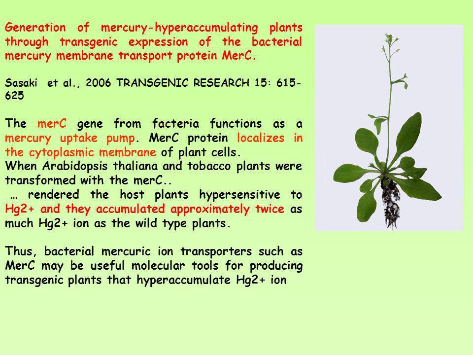 Generation of mercury-hyperaccumulating plants through transgenic expression of the bacterial mercury membrane transport protein MerC. Sasaki et al.,
