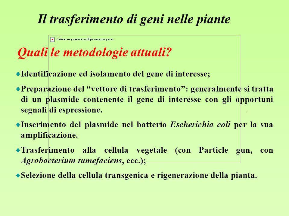Il trasferimento di geni nelle piante Identificazione ed isolamento del gene di interesse; Preparazione del vettore di trasferimento: generalmente si