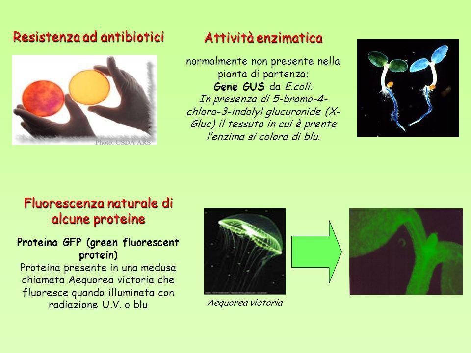 ………SEMBRA FACILE……..B Trasformazione BIOLISTICA o tramite A.