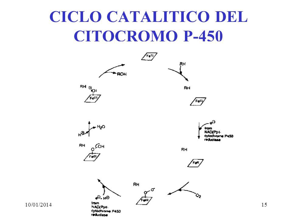 10/01/201415 CICLO CATALITICO DEL CITOCROMO P-450