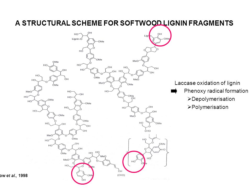 A STRUCTURAL SCHEME FOR SOFTWOOD LIGNIN FRAGMENTS Laccase oxidation of lignin Phenoxy radical formation Depolymerisation Polymerisation Brunow et al.,