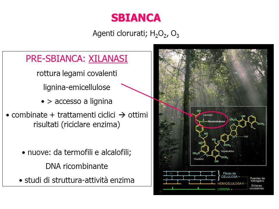 SBIANCA Agenti clorurati; H 2 O 2, O 3 PRE-SBIANCA: XILANASI rottura legami covalenti lignina-emicellulose > accesso a lignina combinate + trattamenti