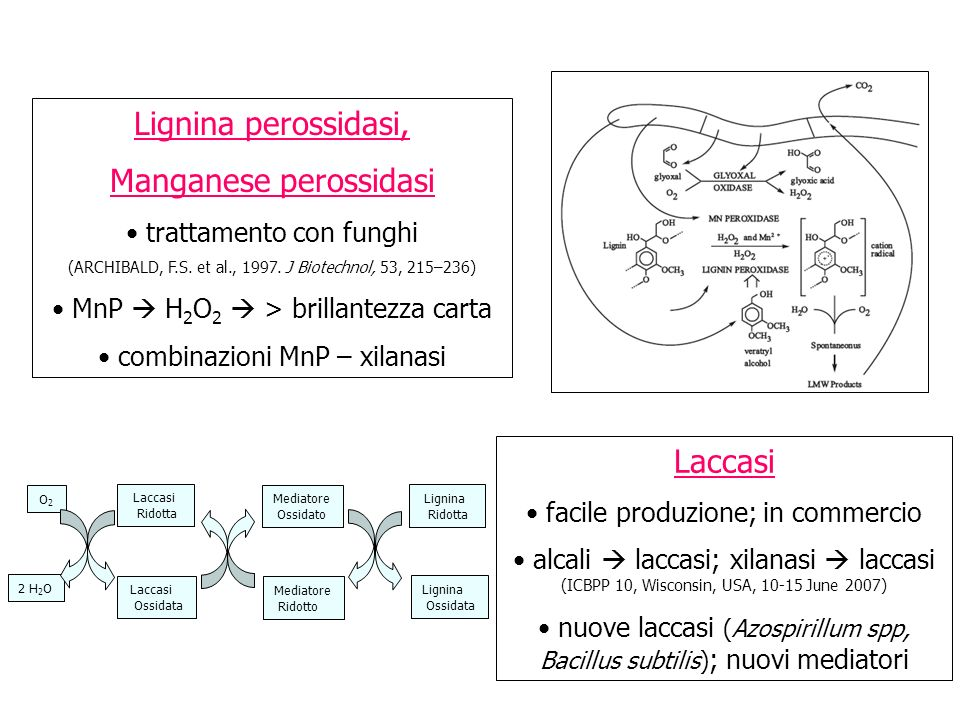 LACCASI Laccases catalyse the oxidation of diphenols, substituted phenols, polyphenols, amines, and many others including fibre bound lignin Laccases can be used to activate, i.e.