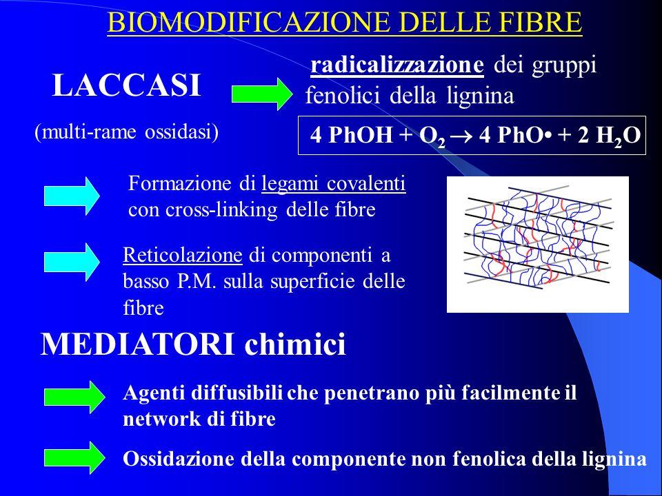 BIOMODIFICAZIONE DELLE FIBRE LACCASI (multi-rame ossidasi) MEDIATORI chimici radicalizzazione dei gruppi fenolici della lignina 4 PhOH + O 2 4 PhO + 2 H 2 O Ossidazione della componente non fenolica della lignina Agenti diffusibili che penetrano più facilmente il network di fibre Formazione di legami covalenti con cross-linking delle fibre Reticolazione di componenti a basso P.M.