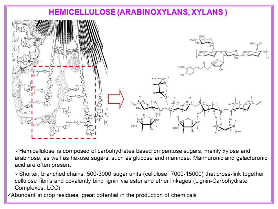 Shorter, branched chains: 500-3000 sugar units (cellulose: 7000-15000) that cross-link together cellulose fibrils and covalently bind lignin via ester