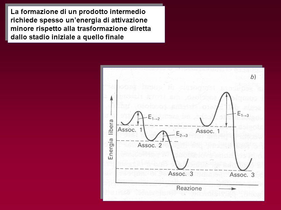 La formazione di un prodotto intermedio richiede spesso unenergia di attivazione minore rispetto alla trasformazione diretta dallo stadio iniziale a q