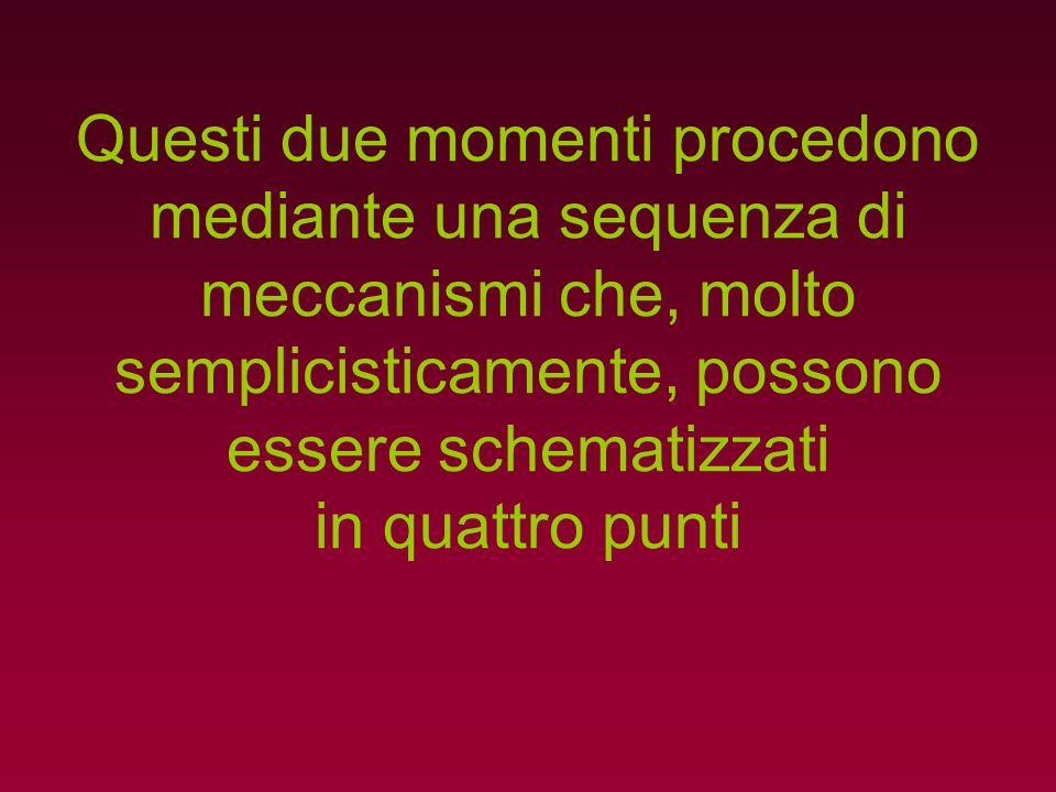 Questi due momenti procedono mediante una sequenza di meccanismi che, molto semplicisticamente, possono essere schematizzati in quattro punti