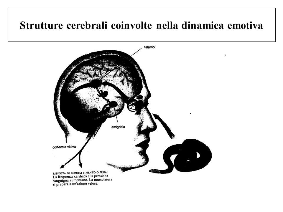 Strutture cerebrali coinvolte nella dinamica emotiva