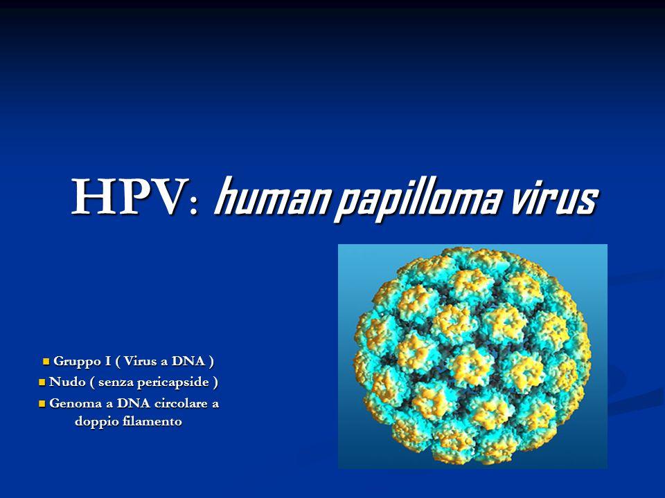 HPV : human papilloma virus Gruppo I ( Virus a DNA ) Gruppo I ( Virus a DNA ) Nudo ( senza pericapside ) Nudo ( senza pericapside ) Genoma a DNA circo