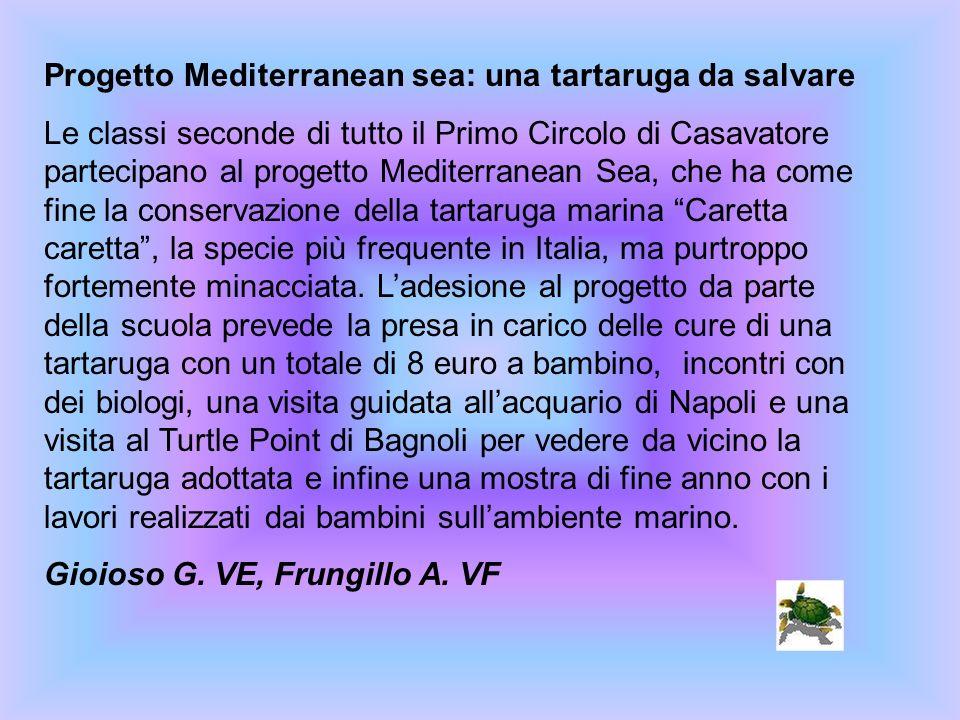 Progetto Mediterranean sea: una tartaruga da salvare Le classi seconde di tutto il Primo Circolo di Casavatore partecipano al progetto Mediterranean S