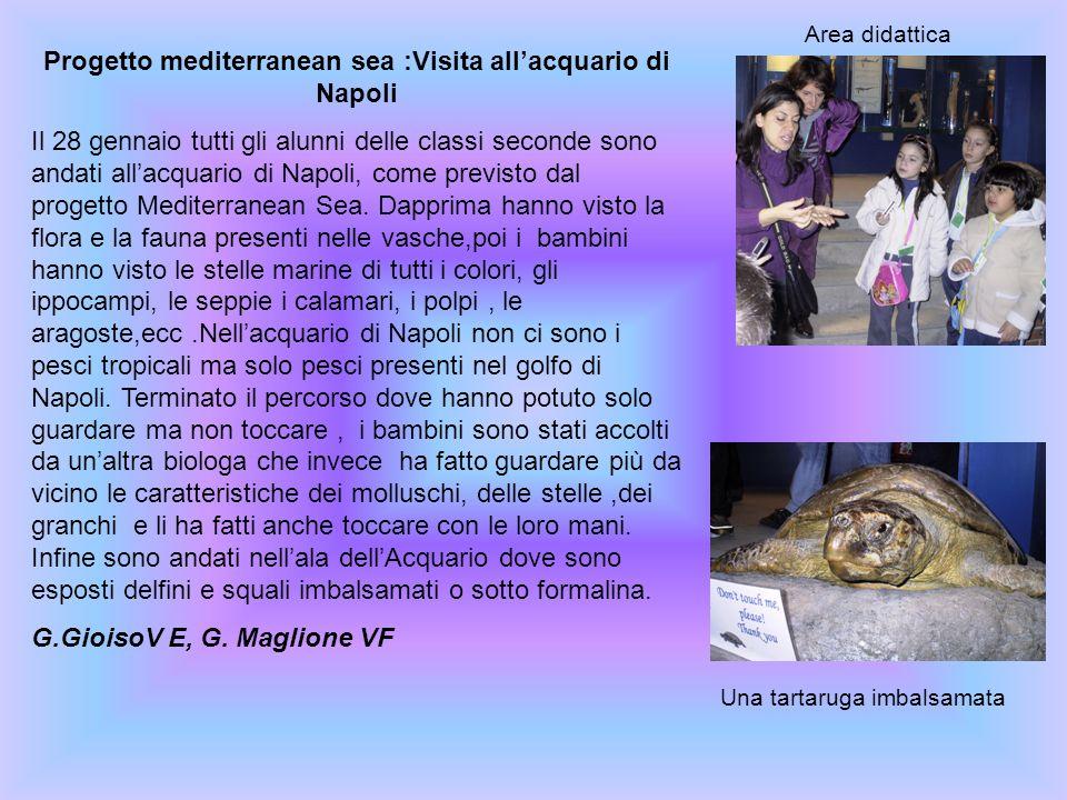 Progetto mediterranean sea :Visita allacquario di Napoli Il 28 gennaio tutti gli alunni delle classi seconde sono andati allacquario di Napoli, come p