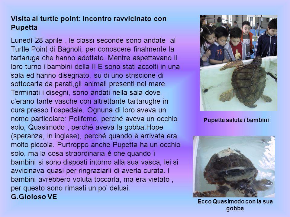 Visita al turtle point: incontro ravvicinato con Pupetta Lunedì 28 aprile, le classi seconde sono andate al Turtle Point di Bagnoli, per conoscere fin