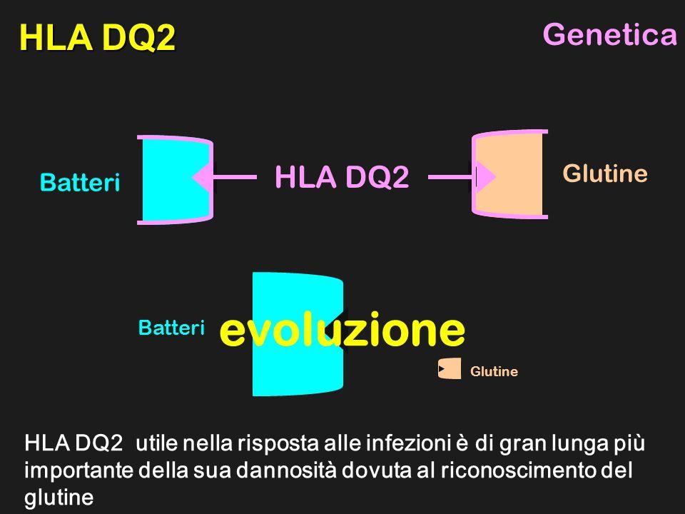 Batteri Glutine HLA DQ2 utile nella risposta alle infezioni è di gran lunga più importante della sua dannosità dovuta al riconoscimento del glutine HLA DQ2 Batteri Glutine HLA DQ2 Genetica evoluzione