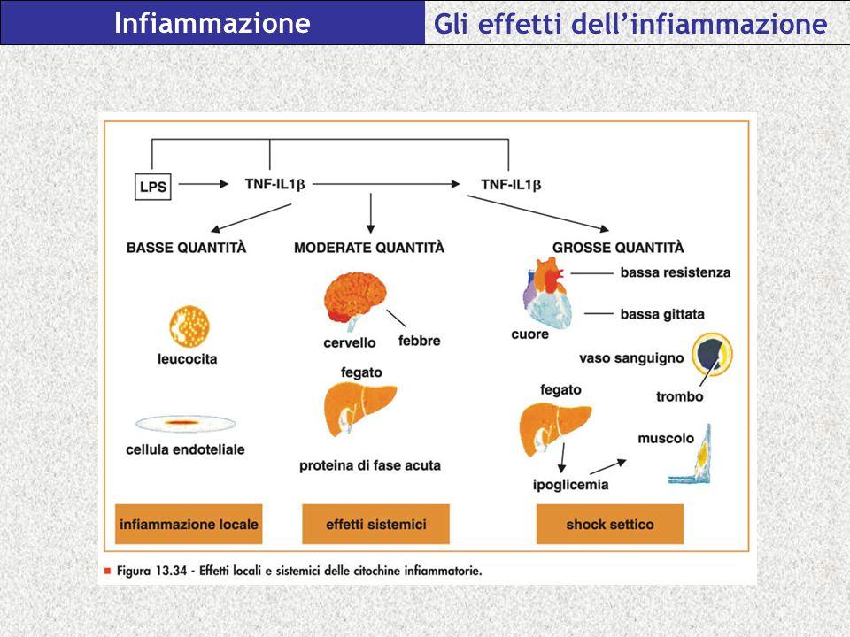 Infiammazione Gli effetti dellinfiammazione