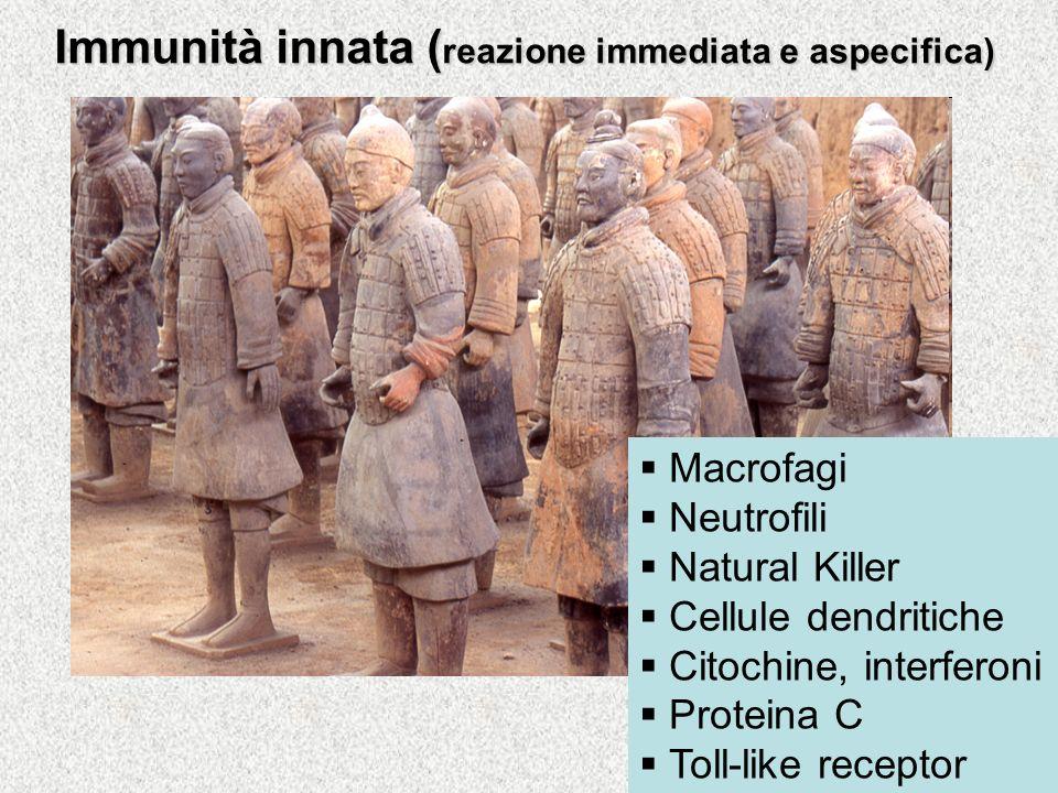 Limmunità Immunità innata Immunità adattativa