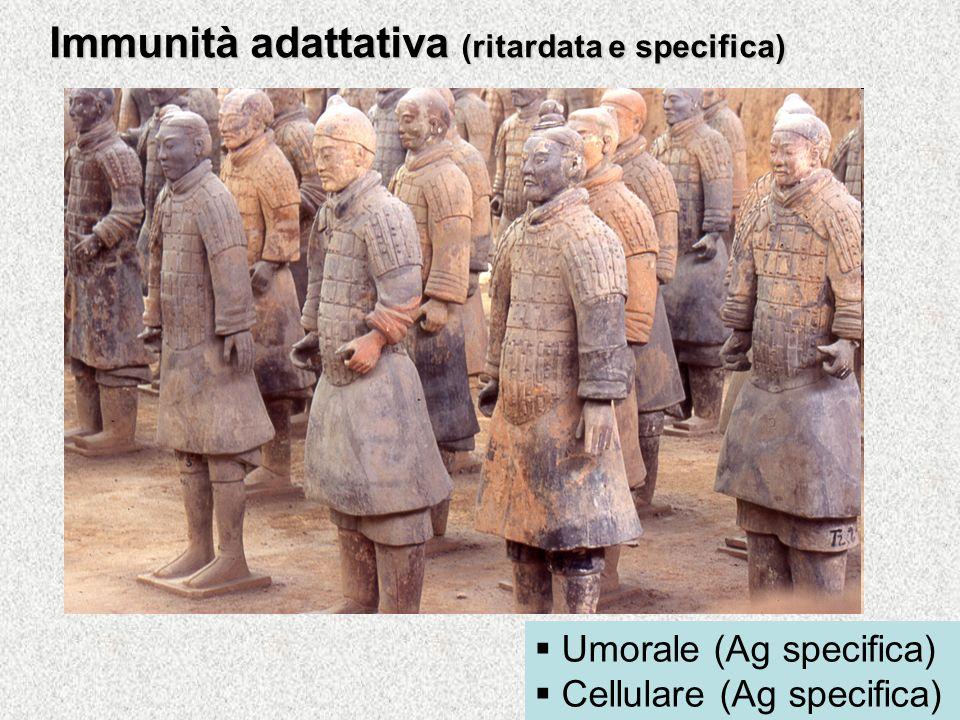 Immunità adattativa (ritardata e specifica) Umorale (Ag specifica) Cellulare (Ag specifica)