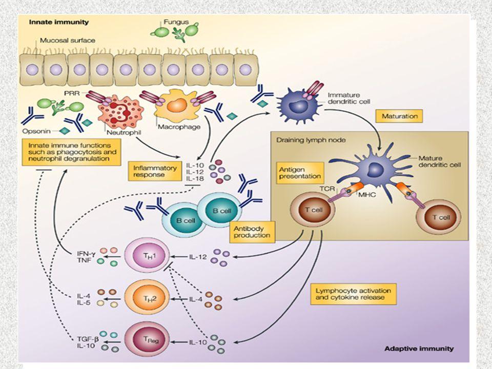 La risposta immunitaria adattativa: A differenza di quella innata, si acquisisce in seguito allesposizione ad uno specifico Ag e include: Cellule pres