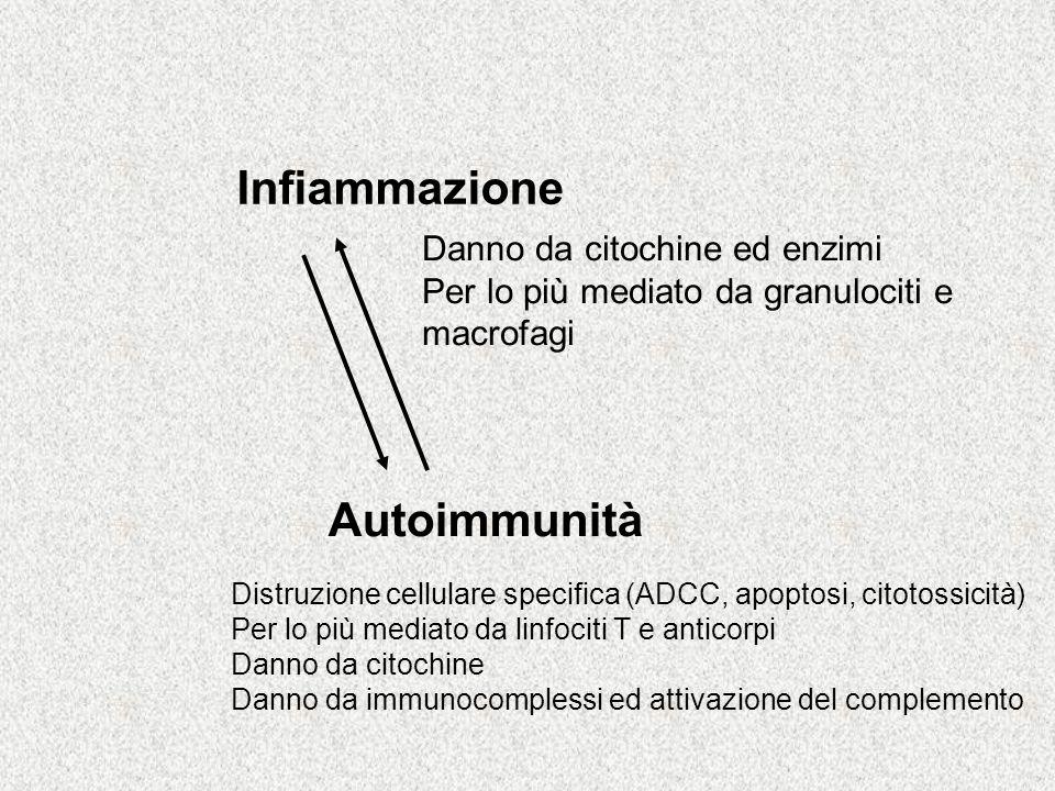 Infiammazione Autoimmunità Danno da citochine ed enzimi Per lo più mediato da granulociti e macrofagi Distruzione cellulare specifica (ADCC, apoptosi, citotossicità) Per lo più mediato da linfociti T e anticorpi Danno da citochine Danno da immunocomplessi ed attivazione del complemento