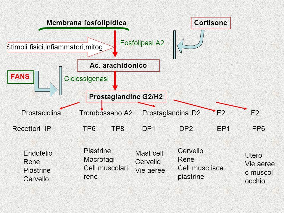 -Reazione Immune - Tossine - Agenti atmosferici - Allergeni - Sost. Chimiche - Inquinanti - Farmaci -Intercettazione cellulare - Produzione di chinine