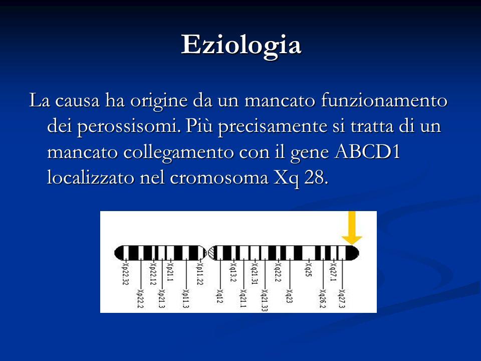 Eziologia La causa ha origine da un mancato funzionamento dei perossisomi. Più precisamente si tratta di un mancato collegamento con il gene ABCD1 loc