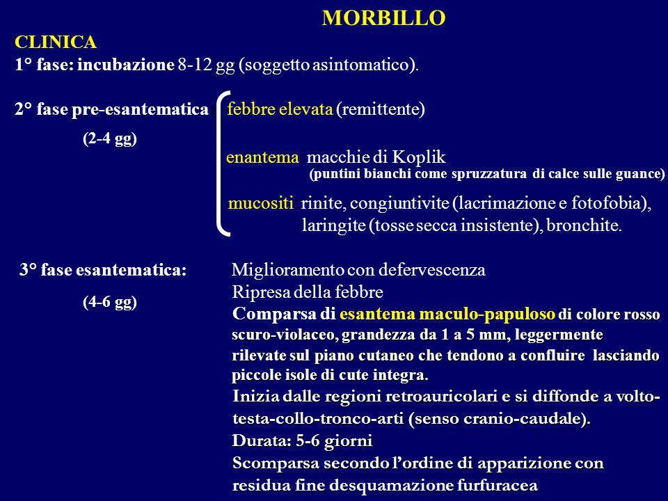 MORBILLO CLINICA 1° fase: incubazione 8-12 gg (soggetto asintomatico). 2° fase pre-esantematica: febbre elevata (remittente) enantema: macchie di Kopl