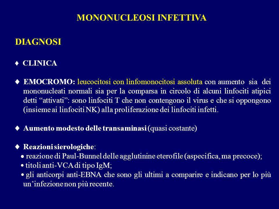 DIAGNOSI CLINICA EMOCROMO: leucocitosi con linfomonocitosi assoluta con aumento sia dei mononucleati normali sia per la comparsa in circolo di alcuni
