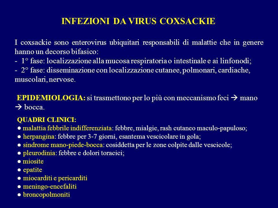 I coxsackie sono enterovirus ubiquitari responsabili di malattie che in genere hanno un decorso bifasico: - 1° fase: localizzazione alla mucosa respir