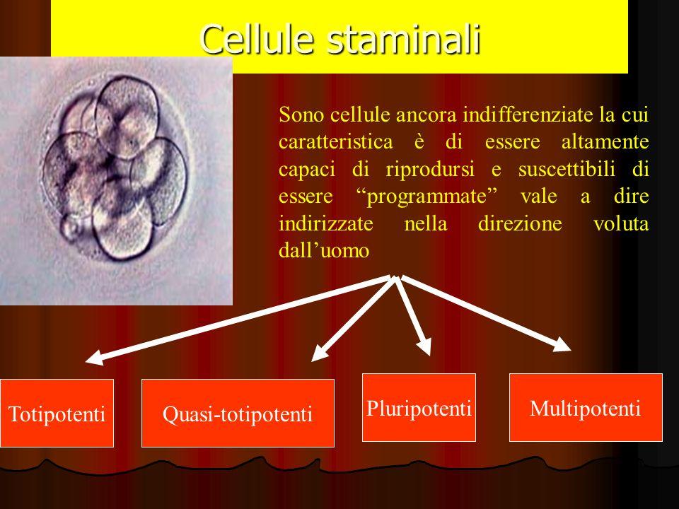 Cellule staminali Sono cellule ancora indifferenziate la cui caratteristica è di essere altamente capaci di riprodursi e suscettibili di essere progra