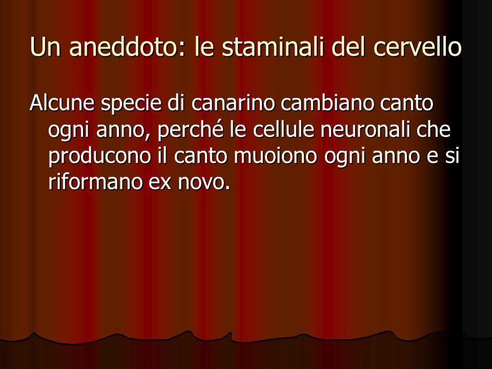 Un aneddoto: le staminali del cervello Alcune specie di canarino cambiano canto ogni anno, perché le cellule neuronali che producono il canto muoiono