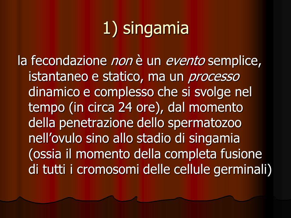 1) singamia la fecondazione non è un evento semplice, istantaneo e statico, ma un processo dinamico e complesso che si svolge nel tempo (in circa 24 o