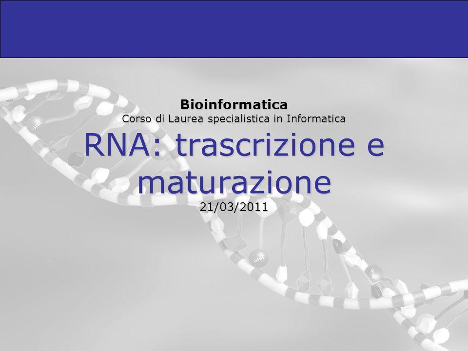 La RNA polimerasi riconosce il promotore Tutte le molecole di RNA polimerasi si trovano già legate al DNA.